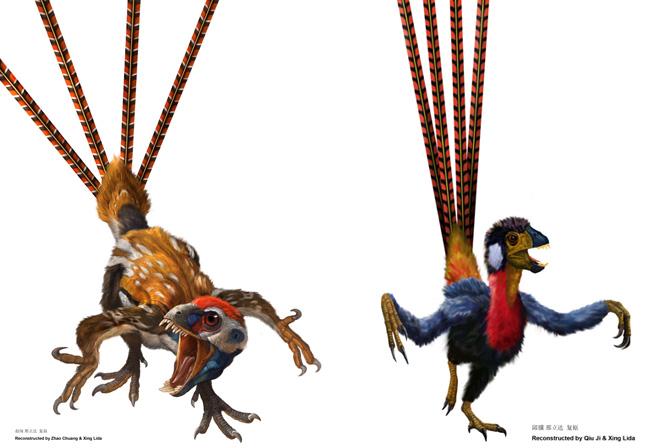 Epidexipteryx hui - Artist