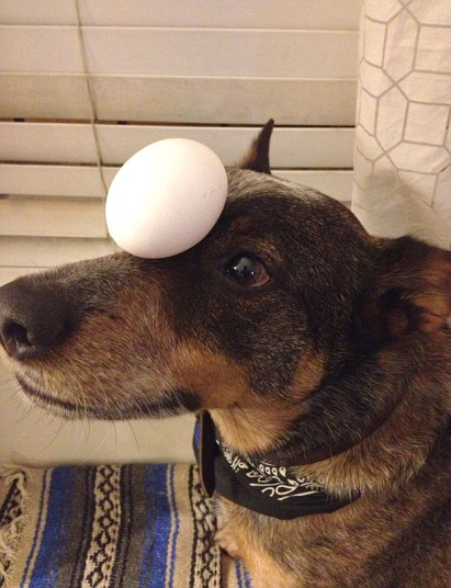 Jack The Dog - egg