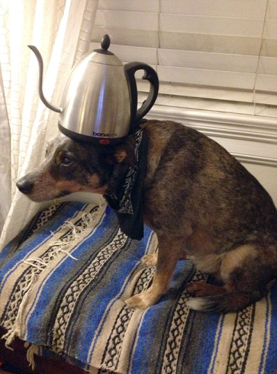 Jack The Dog - Kettle