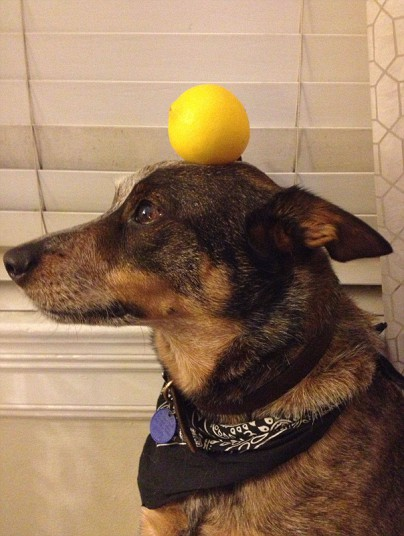Jack The Dog - Lemon
