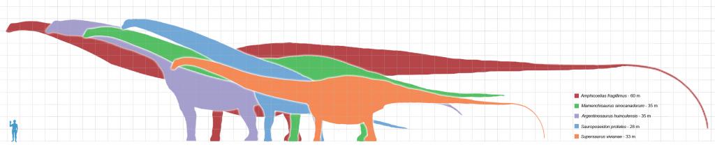 Longest Dinosaur Chart