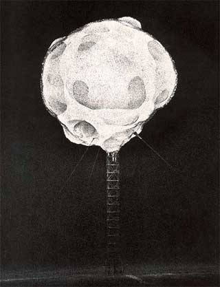 Atom Bomb Photo - Harold Edgerton 1