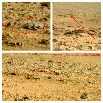 Lizard Found On Mars By Curiosity Rover - Photo