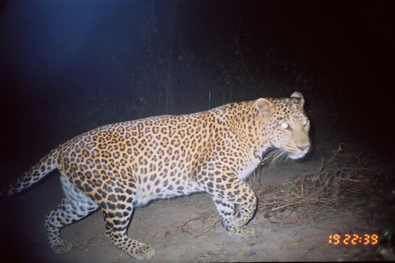 Leopard Attacks Dog In Mumbai Apartment Block
