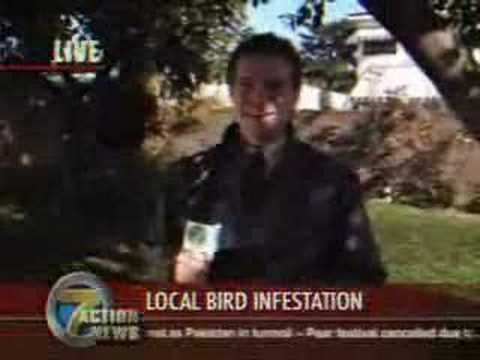 Canadian Bird Infestation - News Reporter Poo In Mouth