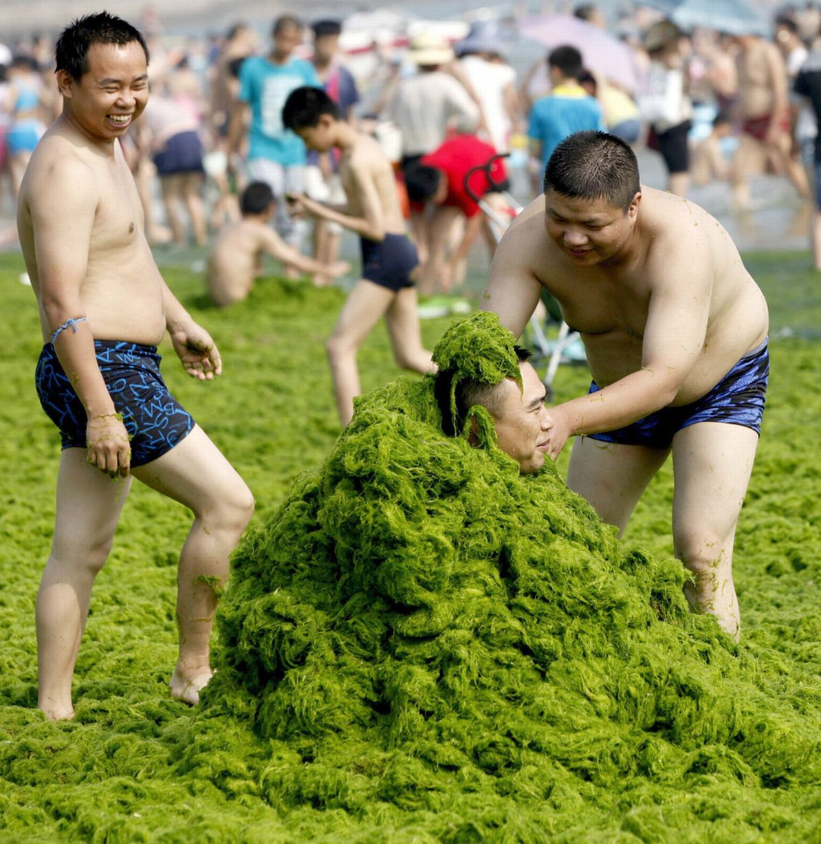Qingdao - Algae Beach - China - Holiday - Covered in Algae
