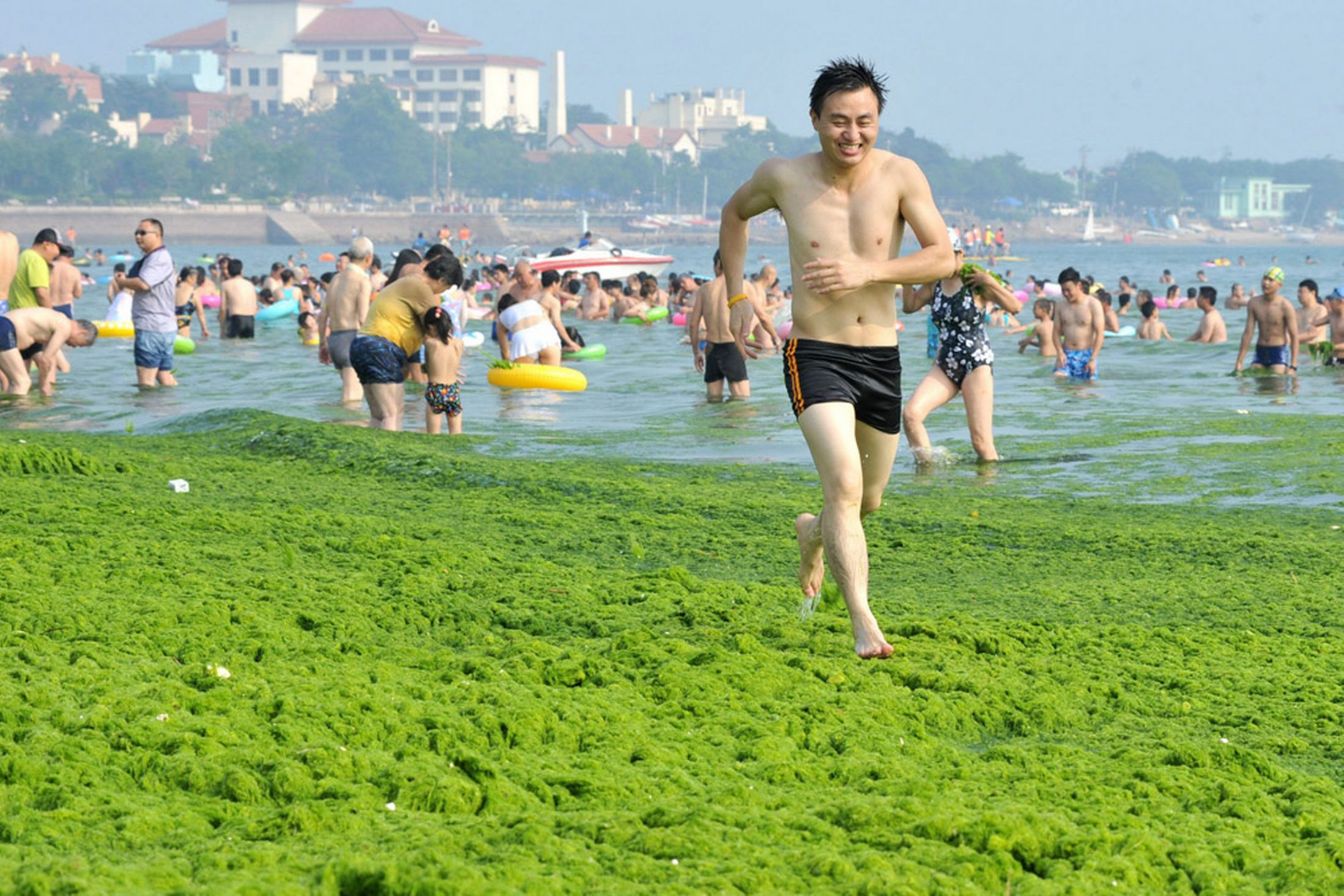 Qingdao - Algae Beach - China - Holiday - Runner