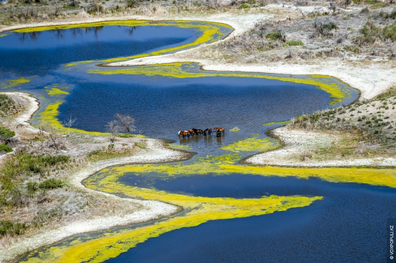 Kazakhstan Photo Collection From Helicopter - Horses in Pool
