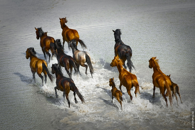 Kazakhstan Photo Collection From Helicopter - Wild Horses Running