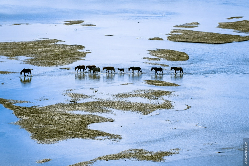 Kazakhstan Photo Collection From Helicopter - Wild Horses