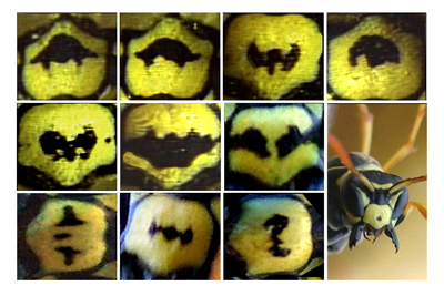 Paper Wasp Recognises Faces - Selection