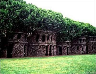 Arborsculpture - tree shaping - Tree House