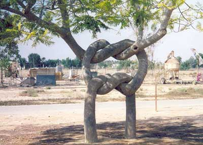 Arborsculpture - tree shaping - Tree knot