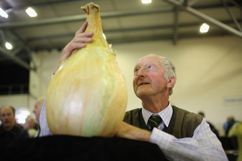 Big Vegetable - Photo Collection - Monster Vegetable - Giant Onion - Peter Glazebrook