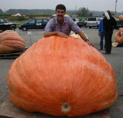 Big Vegetable - Photo Collection - Monster Vegetable - Giant Pumpkin - Steve Daletas