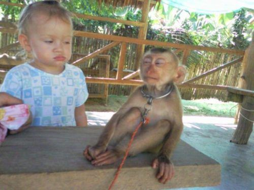 Funniest Pics Ever Best Lol- Don't Trust The Monkey