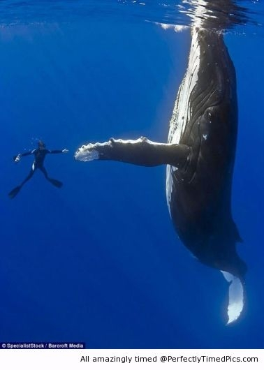 Funniest Pics Ever Best Lol- Humpback High Five