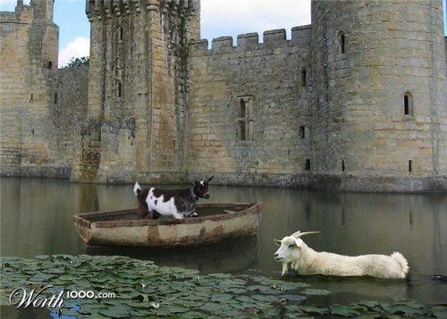 Goats In Weird Places - Goat On A Boat In A Moat