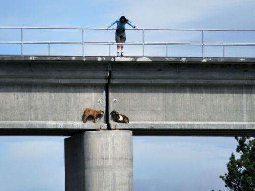 Odd Goat Rescue