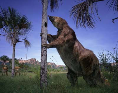 History of the Avocado - Giant Ground Sloth