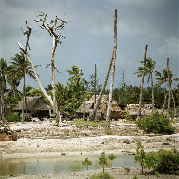 Trees near Tarawa dying due to encroaching sea water.
