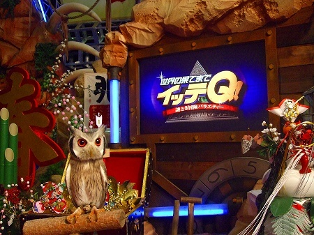 Northern White Faced Owl - Transformer Owl TV Star