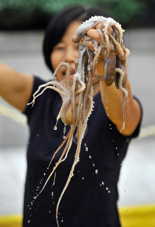 South Korea - Food Festival - Eating Live Octopus - Women holding octopus