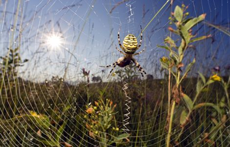 Spider Web - Spider Silk - Explanation - In Sun