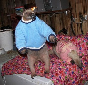 Animals wearing sweaters - jumpers - Aardvark