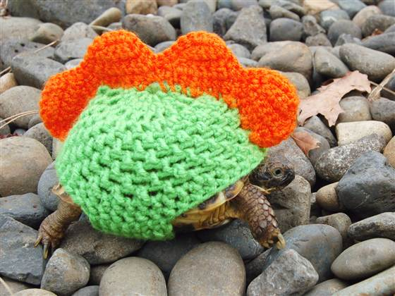 Knitting Pattern For Tortoise Jumper : Pictures Of Animals Wearing Sweaters   Lazer Horse