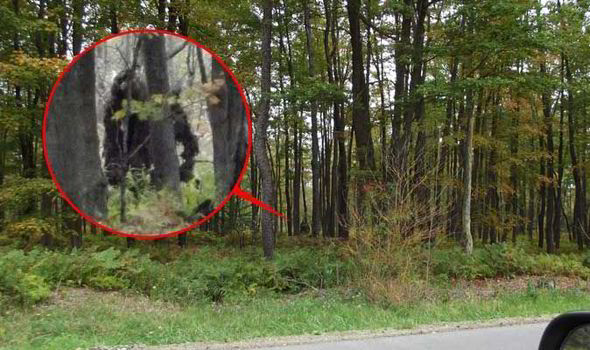 New Yeti Sighting - Big Foot - Sasquatch - Pennsylvania - Stoneman - Forest 3