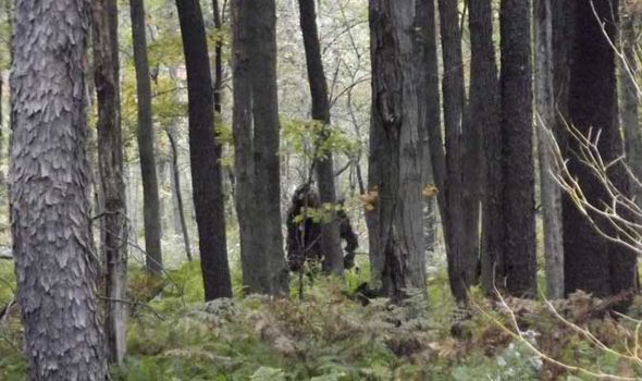 New Yeti Sighting - Big Foot - Sasquatch - Pennsylvania - Stoneman - Forest
