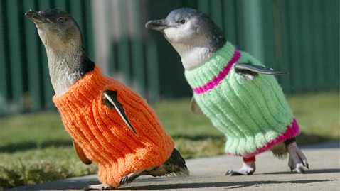 Penguin Sweaters - 2 NZ penguins - new zealand oil spill