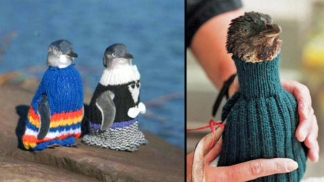 Penguin Sweaters - NZ penguins jumpers