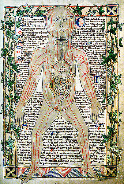 Amazing Beautiful Old Biology Science Drawings - 13th century veins