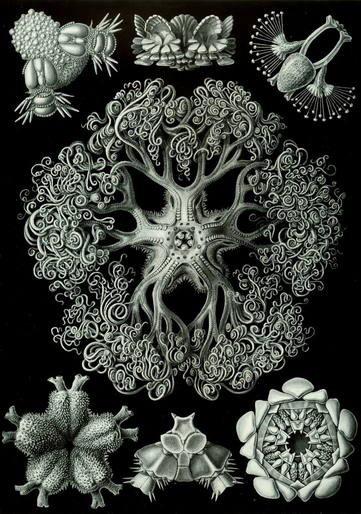 Amazing Beautiful Old Biology Science Drawings - 1904 by Ernst Haeckel - Art Forms In Nature