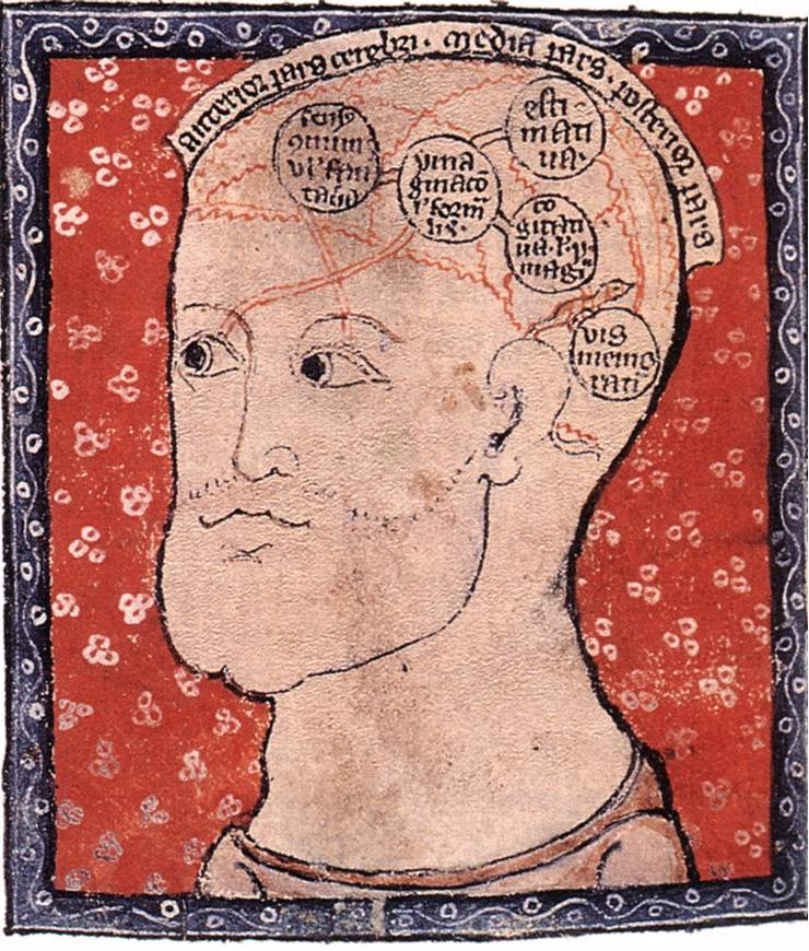 Amazing Beautiful Old Biology Science Drawings - Medieval Brain Map