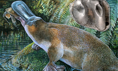 giant carnivorous platypus
