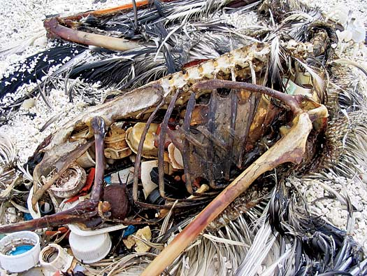 Great Pacific Garbage Patch - Pacific Trash Vortex - Dead Bird