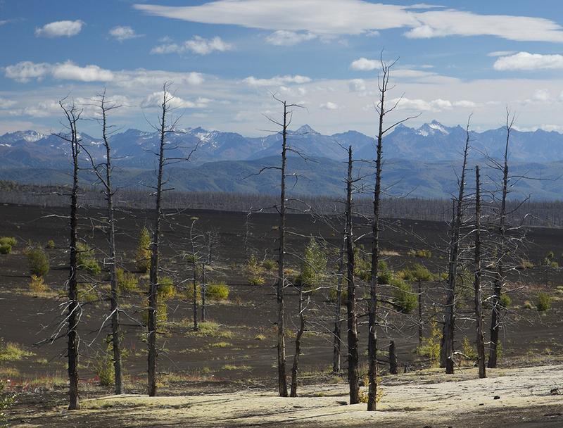 Kamchatka - Dead Forest