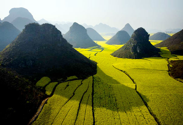 Ocean of flowers - Luoping - China - Air