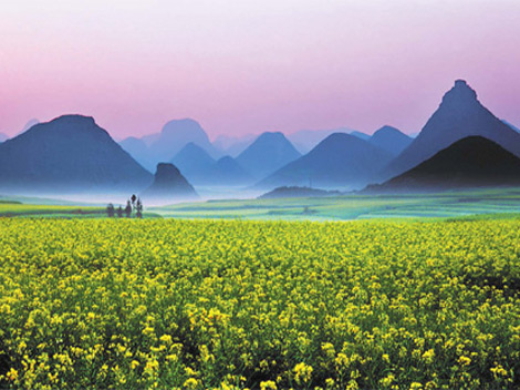 Ocean of flowers - Luoping - China - Mountains