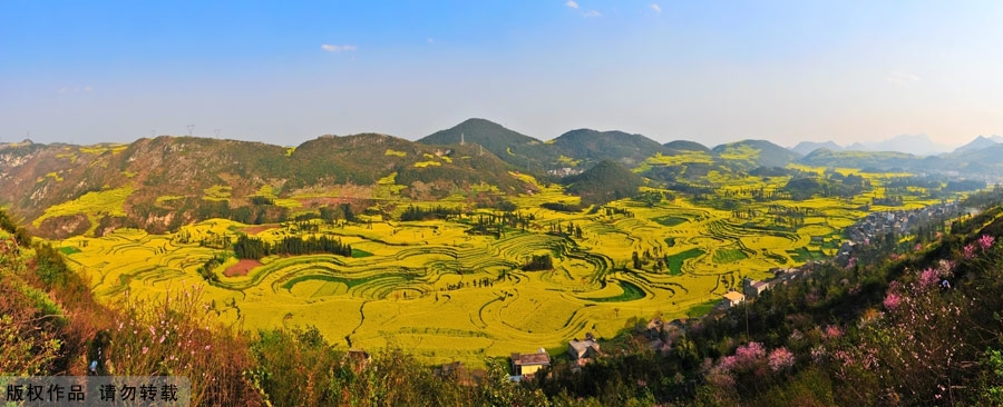 Ocean of flowers - Luoping - China - Panorama
