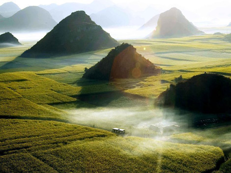 Ocean of flowers - Luoping - China - Sunrise