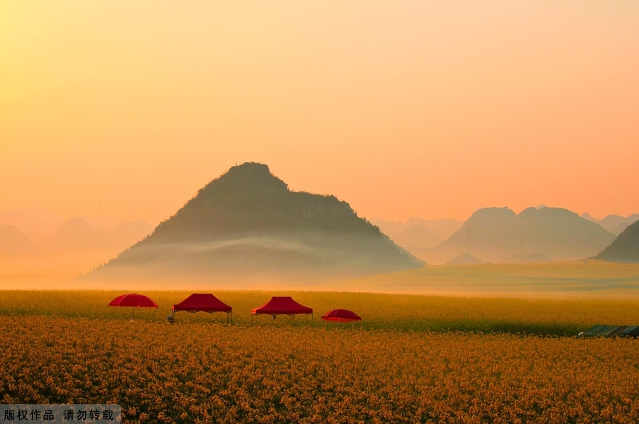Ocean of flowers - Luoping - China - Tents