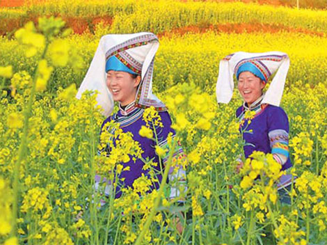 Ocean of flowers - Luoping - China - locals