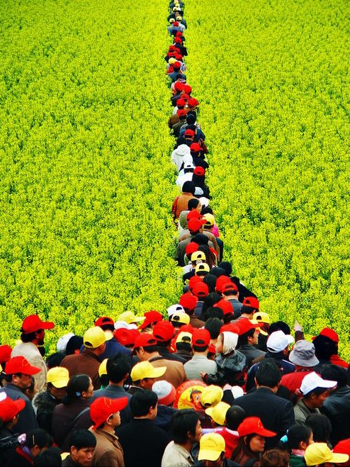 Ocean of flowers - Luoping - China - tourists