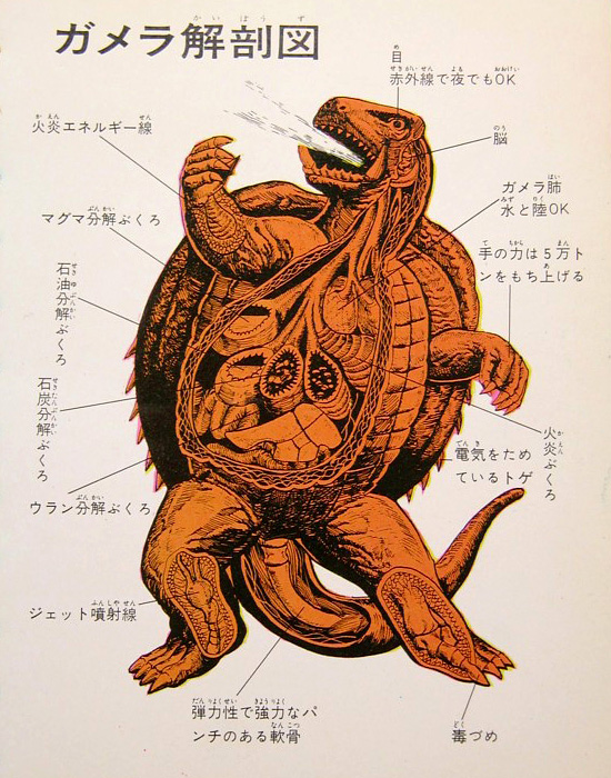 Gamera - Japan Cartoon Anatomy - Gamera