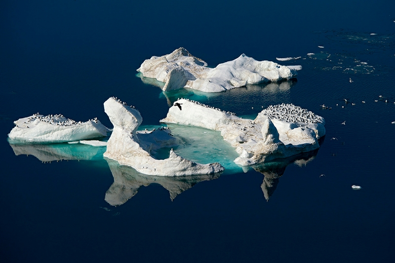 Wrangel Island - Russia - Wildlife Photos - Ice