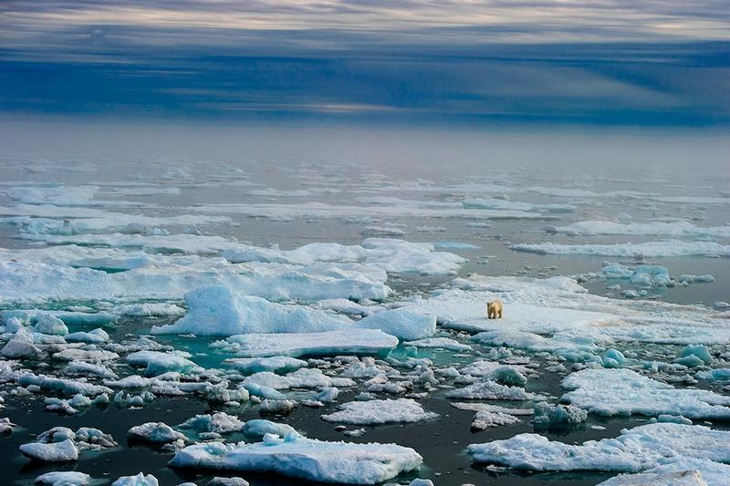 Wrangel Island - Russia - Wildlife Photos - Polar on Ice